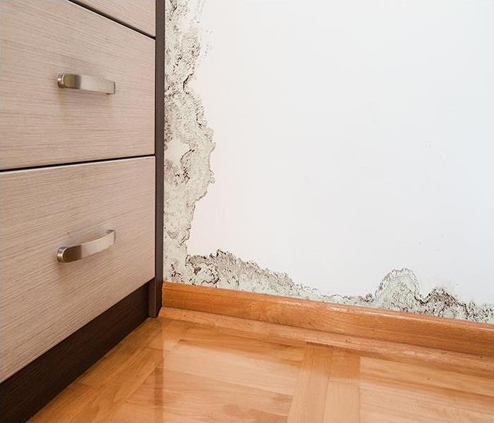 Mold Remediation Finding Mold Damage In Your Merritt Island Home