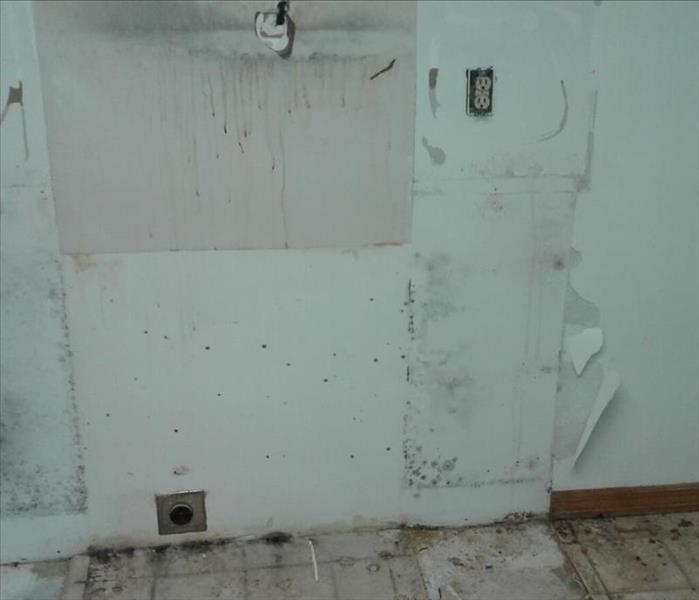 Mold Remediation Don't leave your water damage to chance and create a mold problem