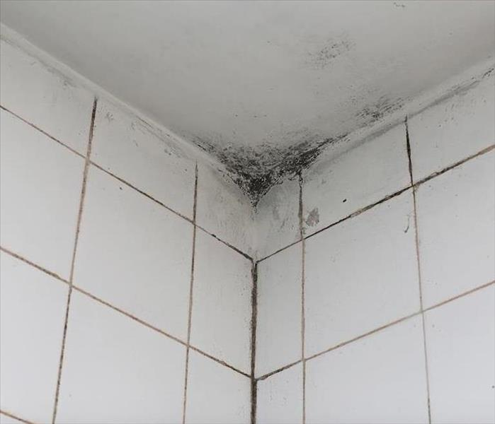 Mold Remediation SERVPRO Offers Ways to Effectively Remediate Mold Damage in Your Rockledge Home
